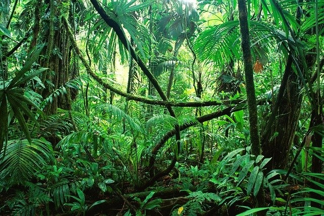 Jungle Image by bere von awstburg from Pixabay